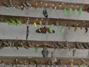 Butterfly-farm in Mindo